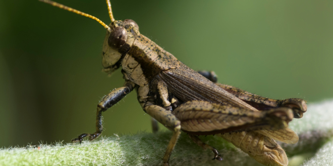 Photo of Hearing Crickets on Web Conference Calls? 3 Tips to Get People to Participate!